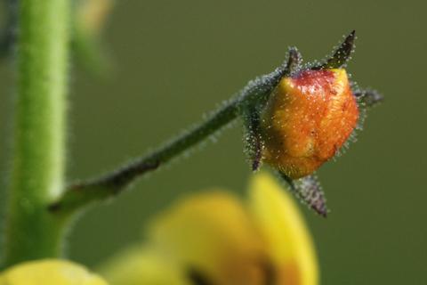 Image http://bioimages.vanderbilt.edu/lq/thomas/w0177-01-05.jpg