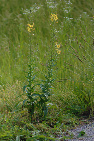 Image http://bioimages.vanderbilt.edu/lq/thomas/w0178-02-04.jpg