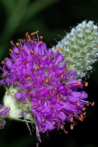 Image http://bioimages.vanderbilt.edu/lq/thomas/w0184-01-04.jpg