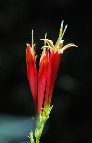Image http://bioimages.vanderbilt.edu/lq/thomas/w0185-02-02.jpg