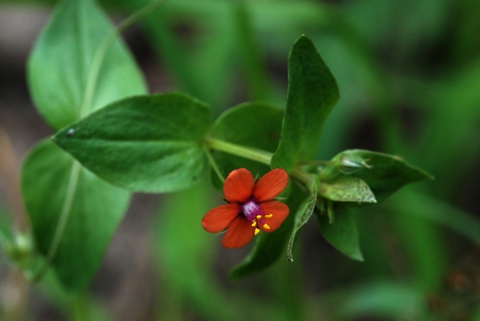 Image http://bioimages.vanderbilt.edu/lq/thomas/w0186-01-05.jpg