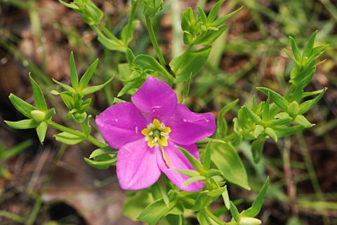 Image http://bioimages.vanderbilt.edu/lq/thomas/w0190-02-03.jpg