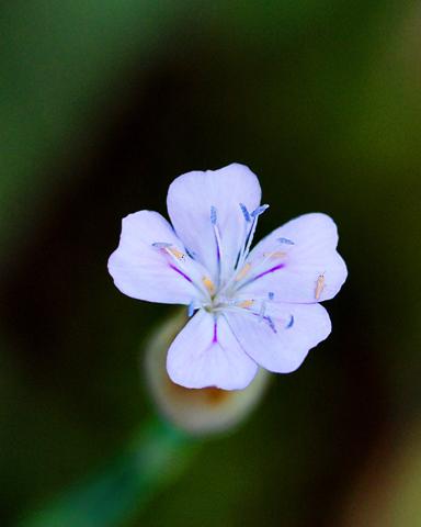 Image http://bioimages.vanderbilt.edu/lq/thomas/w0196-01-04.jpg