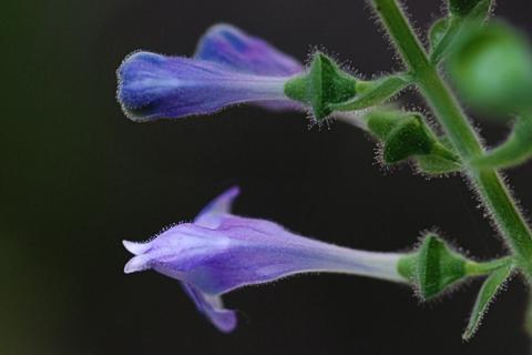 Image http://bioimages.vanderbilt.edu/lq/thomas/w0197-01-02.jpg