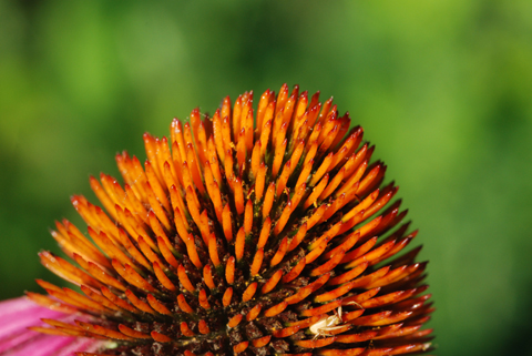 Image http://bioimages.vanderbilt.edu/lq/thomas/w0198-01-05.jpg