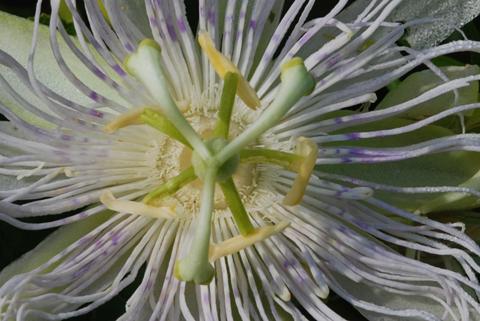 Image http://bioimages.vanderbilt.edu/lq/thomas/w0202-01-01.jpg