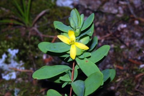 Image http://bioimages.vanderbilt.edu/lq/thomas/w0208-01-03.jpg