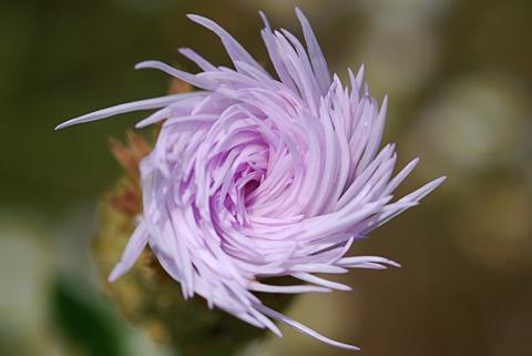 Image http://bioimages.vanderbilt.edu/lq/thomas/w0211-01-09.jpg
