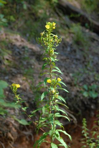 Image http://bioimages.vanderbilt.edu/lq/thomas/w0214-01-02.jpg