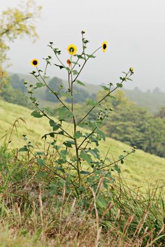 Image http://bioimages.vanderbilt.edu/lq/thomas/w0217-01-03.jpg