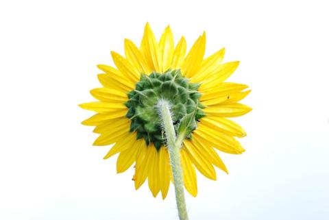 Image http://bioimages.vanderbilt.edu/lq/thomas/w0217-01-05.jpg