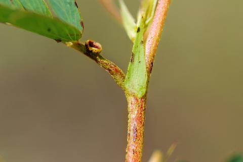 Image http://bioimages.vanderbilt.edu/lq/thomas/w0218-01-03.jpg