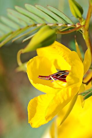 Image http://bioimages.vanderbilt.edu/lq/thomas/w0218-01-08.jpg