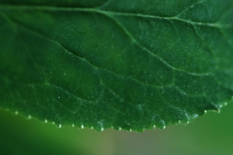 Image http://bioimages.vanderbilt.edu/lq/thomas/w0224-01-05.jpg