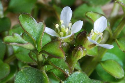 Image http://bioimages.vanderbilt.edu/lq/thomas/w0228-01-02.jpg