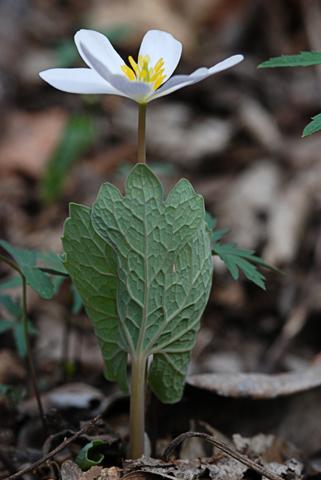 Image http://bioimages.vanderbilt.edu/lq/thomas/w0245-01-06.jpg