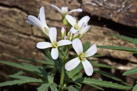 Image http://bioimages.vanderbilt.edu/lq/thomas/w0246-01-03.jpg
