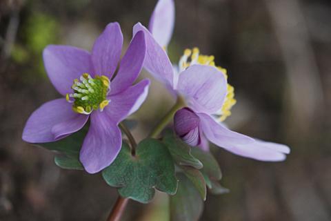 Image http://bioimages.vanderbilt.edu/lq/thomas/w0248-01-02.jpg