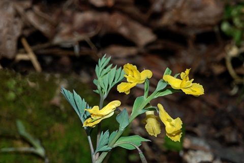 Image http://bioimages.vanderbilt.edu/lq/thomas/w0249-01-05.jpg