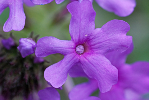 Image http://bioimages.vanderbilt.edu/lq/thomas/w0250-01-03.jpg