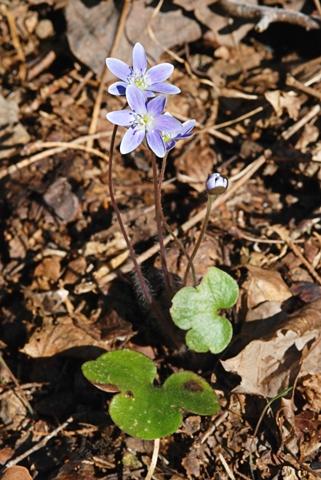 Image http://bioimages.vanderbilt.edu/lq/thomas/w0252-01-05.jpg