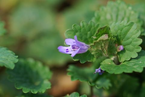 Image http://bioimages.vanderbilt.edu/lq/thomas/w0253-01-05.jpg