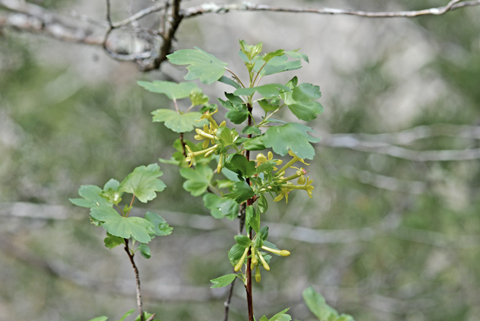 Image http://bioimages.vanderbilt.edu/lq/thomas/w0256-01-01.jpg