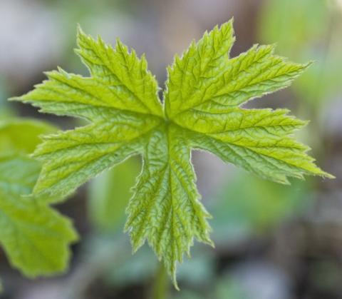 Image http://bioimages.vanderbilt.edu/lq/thomas/w0265-02-05.jpg