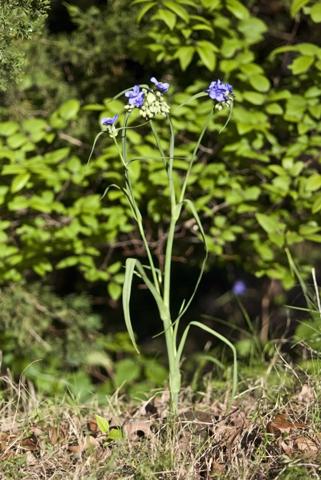Image http://bioimages.vanderbilt.edu/lq/thomas/w0299-01-01.jpg