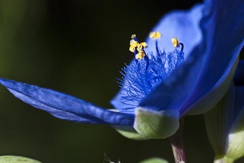 Image http://bioimages.vanderbilt.edu/lq/thomas/w0299-01-03.jpg