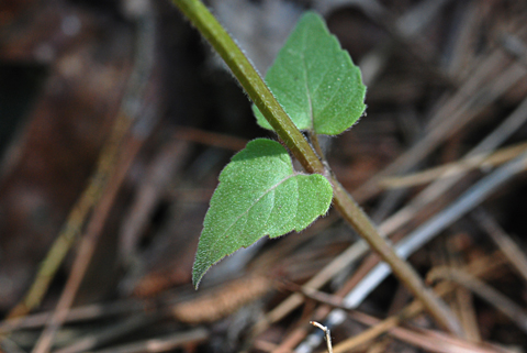 Image http://bioimages.vanderbilt.edu/lq/thomas/w0301-01-05.jpg