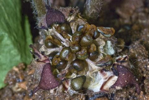 Image http://bioimages.vanderbilt.edu/lq/thomas/w0306-01-01.jpg