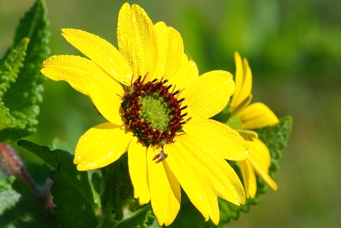 Image http://bioimages.vanderbilt.edu/lq/thomas/w0315-01-02.jpg