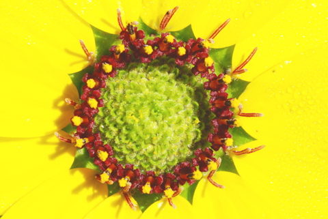 Image http://bioimages.vanderbilt.edu/lq/thomas/w0315-01-03.jpg