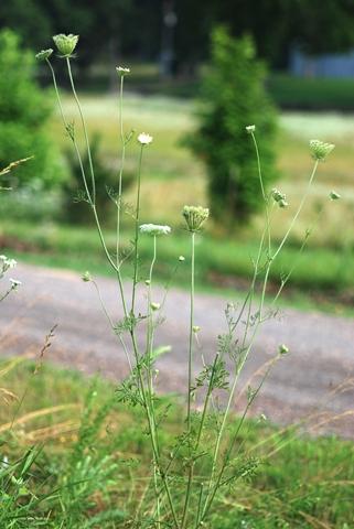 Image http://bioimages.vanderbilt.edu/lq/thomas/w0323-01-02.jpg