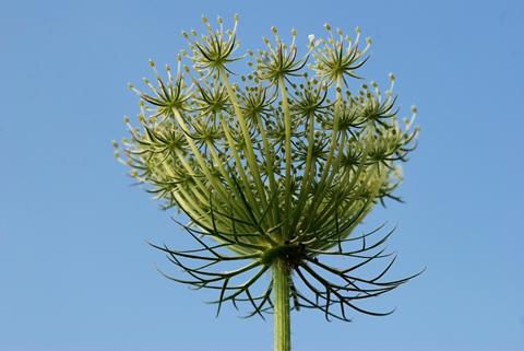 Image http://bioimages.vanderbilt.edu/lq/thomas/w0323-01-06.jpg
