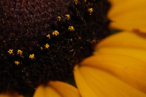 Image http://bioimages.vanderbilt.edu/lq/thomas/w0326-01-01.jpg