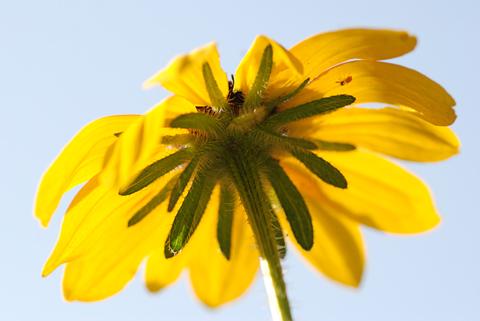 Image http://bioimages.vanderbilt.edu/lq/thomas/w0326-01-05.jpg