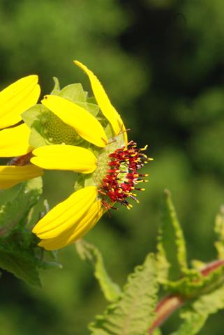 Image http://bioimages.vanderbilt.edu/lq/thomas/w0327-01-03.jpg