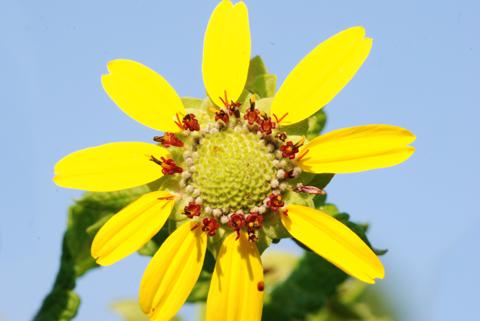 Image http://bioimages.vanderbilt.edu/lq/thomas/w0327-01-06.jpg