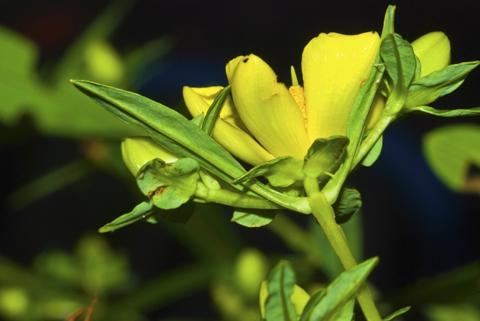 Image http://bioimages.vanderbilt.edu/lq/thomas/w0336-01-02.jpg