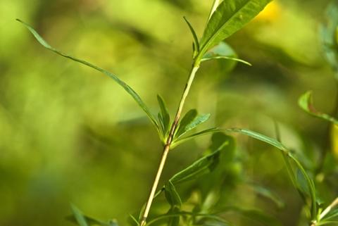 Image http://bioimages.vanderbilt.edu/lq/thomas/w0336-01-04.jpg