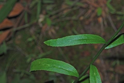 Image http://bioimages.vanderbilt.edu/lq/thomas/w0337-01-06.jpg