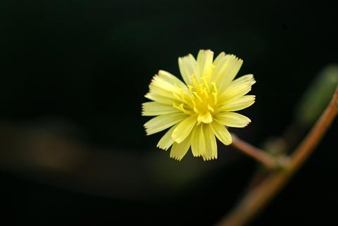 Image http://bioimages.vanderbilt.edu/lq/thomas/w0340-01-04.jpg