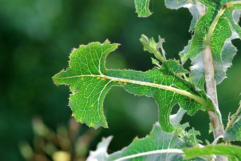 Image http://bioimages.vanderbilt.edu/lq/thomas/w0340-01-09.jpg