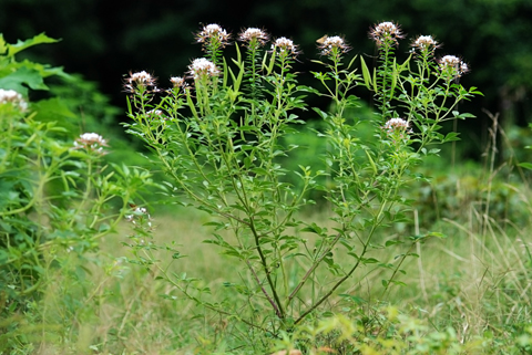Image http://bioimages.vanderbilt.edu/lq/thomas/w0342-01-01.jpg