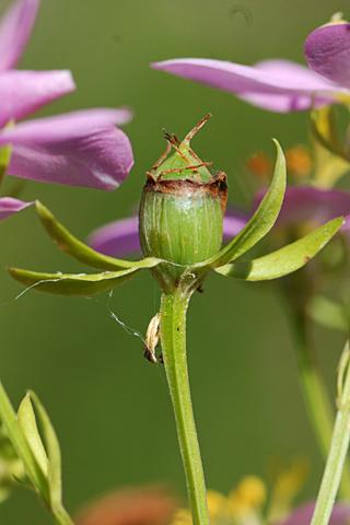 Image http://bioimages.vanderbilt.edu/lq/thomas/w0343-01-10.jpg
