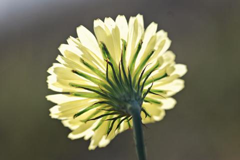 Image http://bioimages.vanderbilt.edu/lq/thomas/w0345-01-08.jpg
