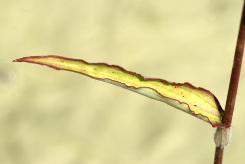 Image http://bioimages.vanderbilt.edu/lq/thomas/w0346-01-01.jpg