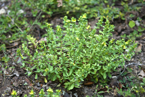 Image http://bioimages.vanderbilt.edu/lq/thomas/w0358-01-03.jpg